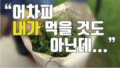 """[자막뉴스] """"내가 먹을거 아니니까..."""" '농약 범벅' 돌미나리"""