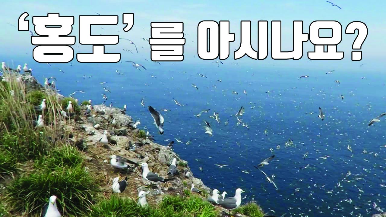 """[자막뉴스] """"꼭 한 번 가고싶다""""...철새들의 천국, 홍도"""