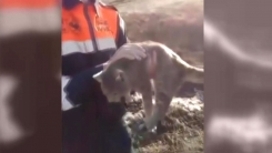 [지구촌생생영상] 콘크리트 구멍 속 고양이...1시간 만에 구조