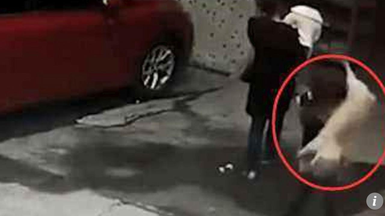 지나가던 中여성, 건물서 떨어진 개와 부딪혀 의식 불명