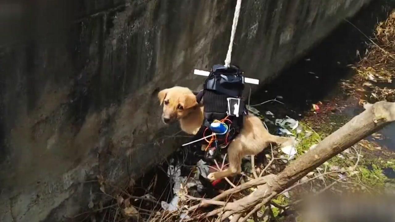 드론으로 강아지 구조한 '로봇 엔지니어'