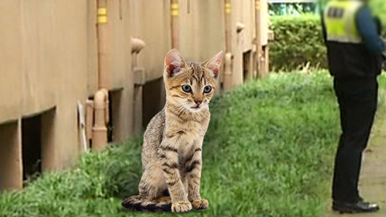 '쭈쭈'와 친구 고양이들, 누가 죽였을까?