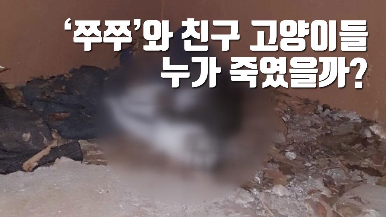 [자막뉴스] '쭈쭈'와 친구 고양이들, 누가 죽였을까?
