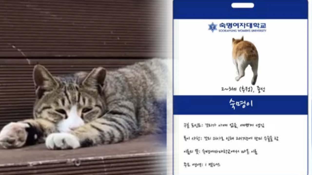 [좋은뉴스] 길고양이에 학생증 만들어준 학생들