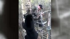 [지구촌생생영상] 나무 위에서 소년과 마주친 야생 곰의 반응