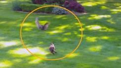 [지구촌생생영상] '뛰는 고양이 위에 나는 올빼미'