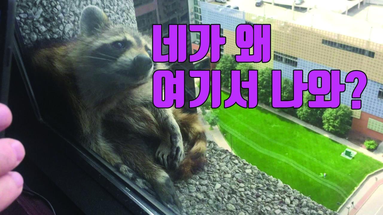 [자막뉴스] 너구리 25층 빌딩 아슬아슬한 등반...특급 구조작전