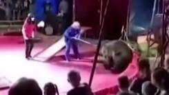 """""""제발 그만 좀 해"""" 서커스 도중 조련사 공격한 곰"""