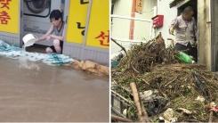 주택 침수·항공기 지연...호우·강풍 피해 속출