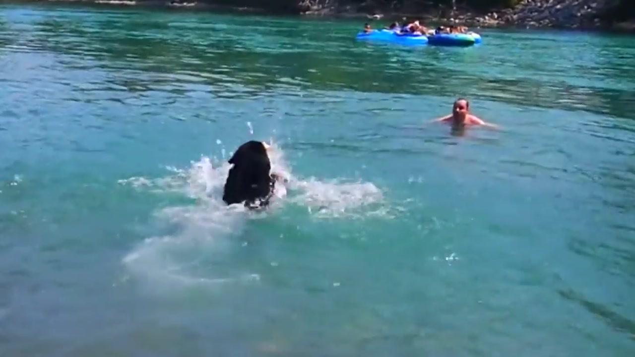 물에 빠진 주인...수영 못하는 반려견의 선택은?