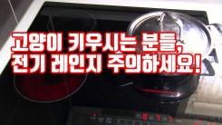 [자막뉴스] 고양이 키우시는 분들, 전기 레인지 주의하세요!