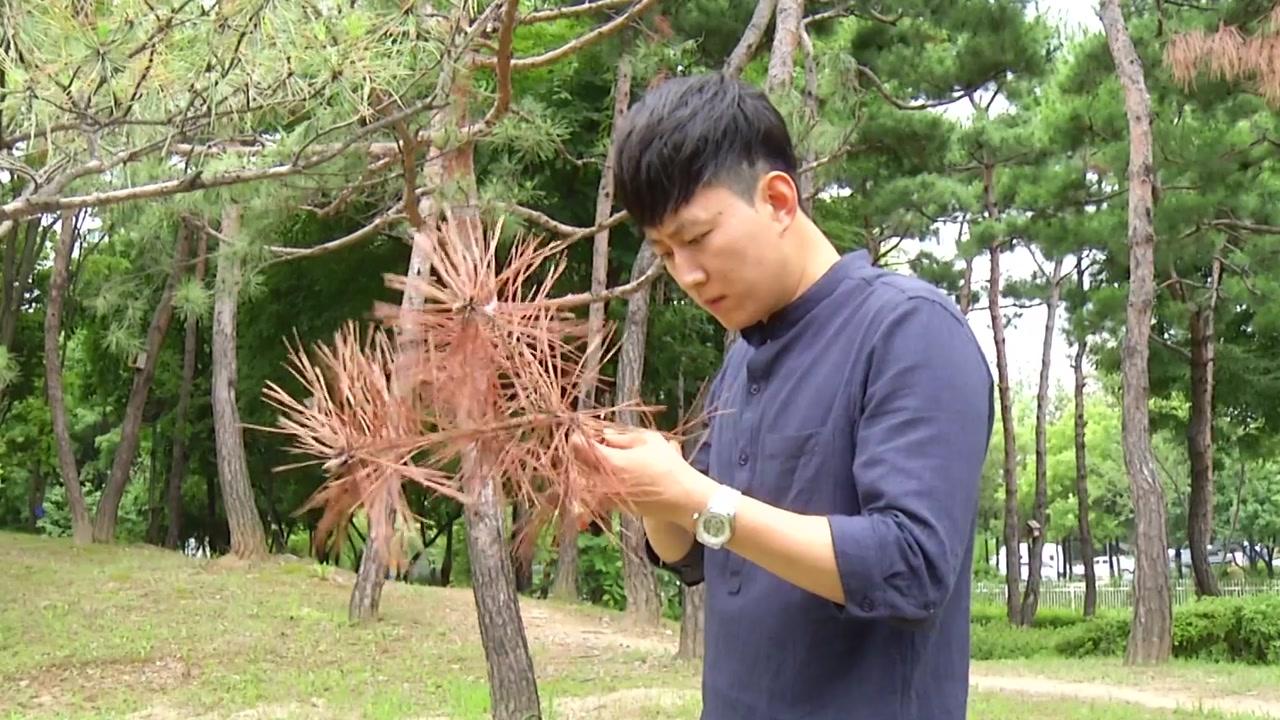 아픈 나무 치료하는 '나무 의사' 생긴다