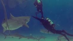 [지구촌생생영상] 등을 보이자 잠수부 향해 돌진하는 상어