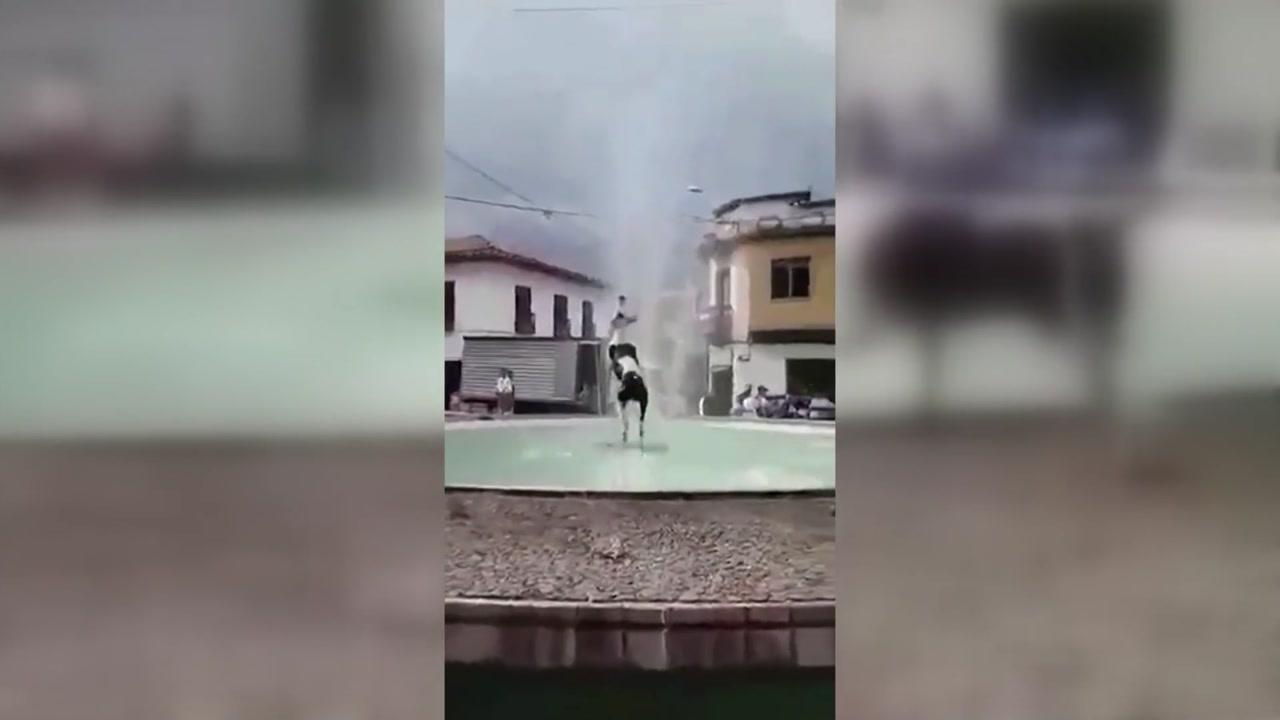[지구촌생생영상] 덥다 더워...다이빙으로 무더위 달래는 강아지