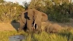 '코끼리 vs 코뿔소' 싱거웠던 싸움의 승자는?