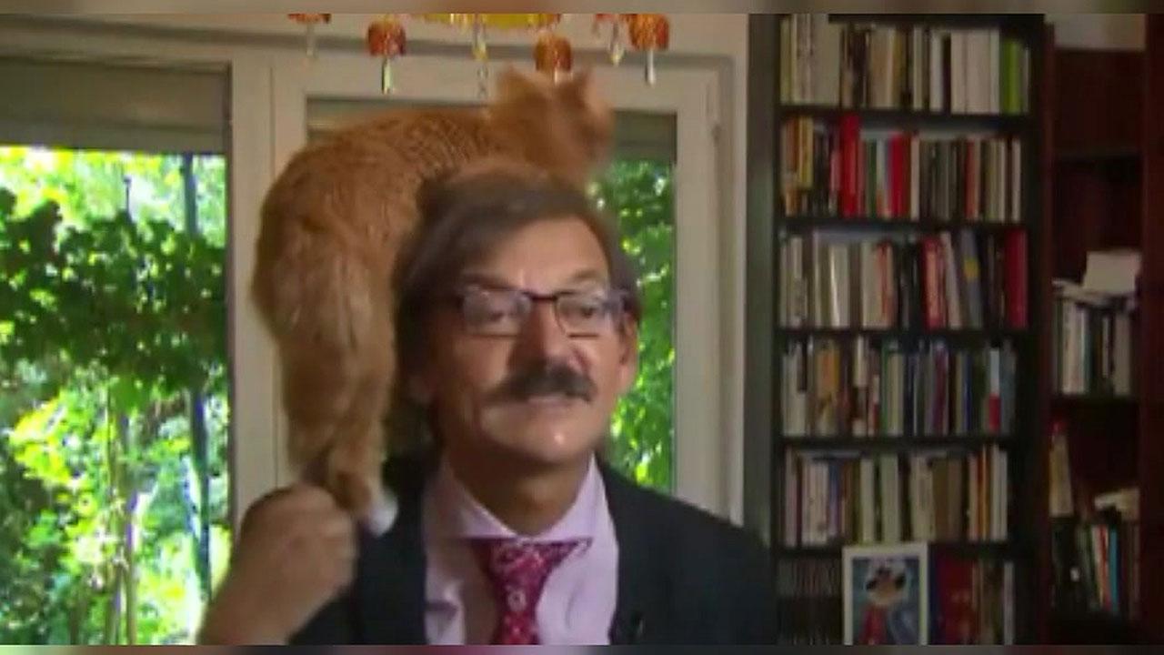 [이브닝] 사법권 논의하는데...'고양이 난입'