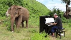 앞 못 보는 코끼리를 위한 피아노 연주 '감동'