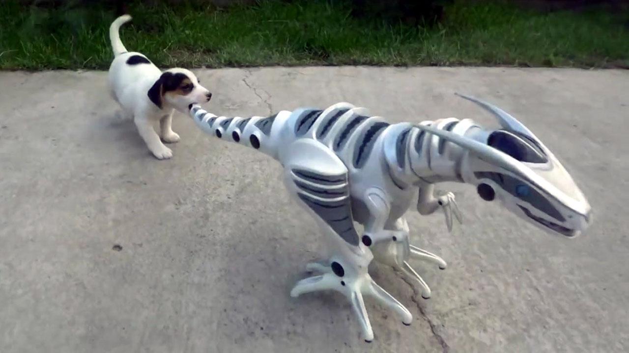 """""""너 어디서 왔니? 같이 놀자"""" 로봇에 반한 강아지"""