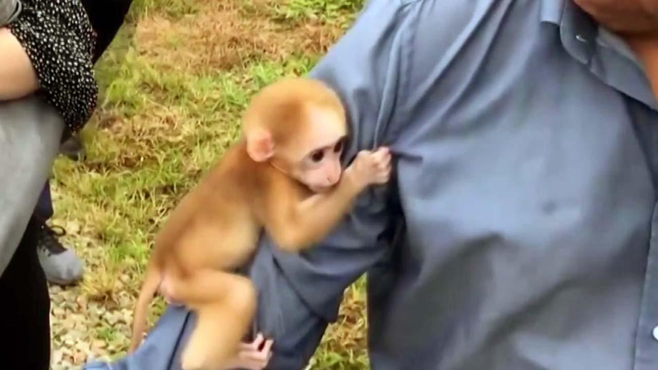 [영상] 겁에 질려 사람 팔 꼭 붙든 새끼 원숭이