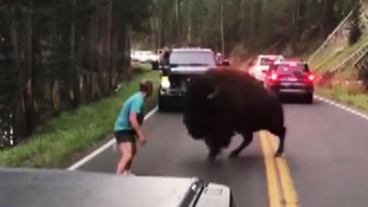 """[영상] """"저리가!"""" 거대 들소에 맞선 남자"""