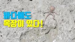 """[자막뉴스] """"바다에도 목장이 있다!"""""""