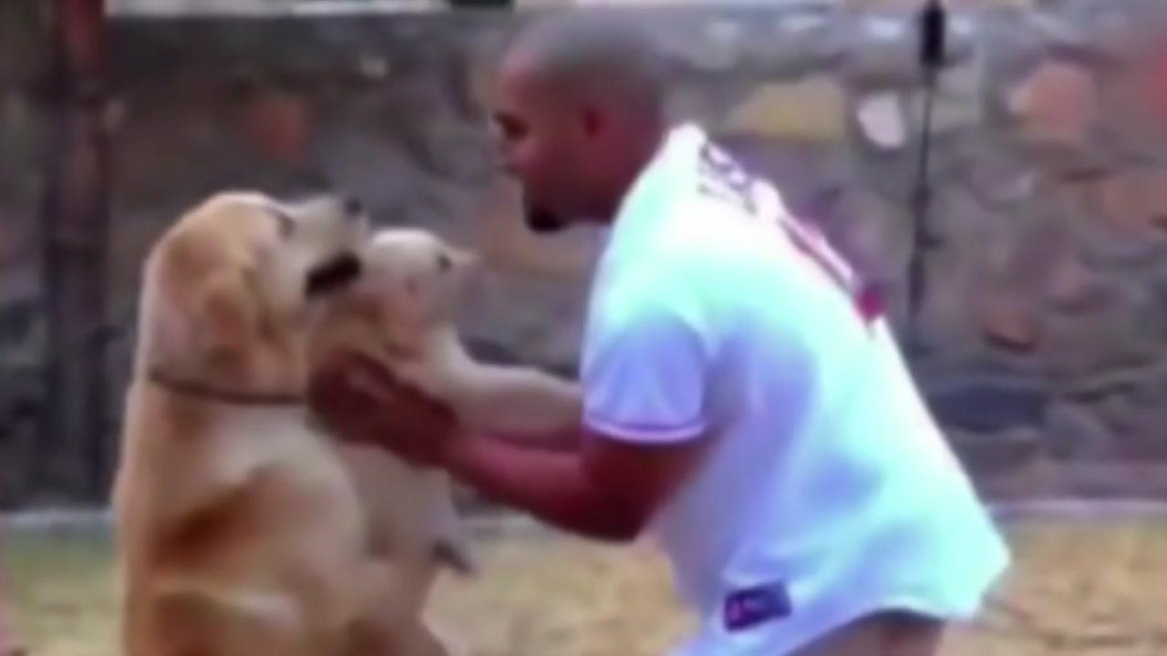 [지구촌생생영상] 새끼 강아지 필사적으로 지키는 '어미개'