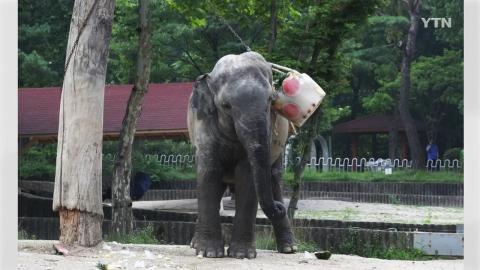 서울대공원 아시아코끼리 폐사...폭염 영향 가능성