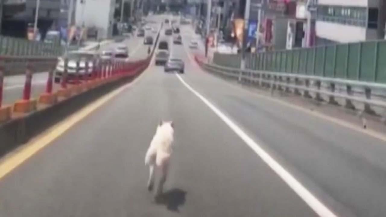 [좋은뉴스] 갑자기 도로로 뛰어든 강아지...운전자의 반응은?