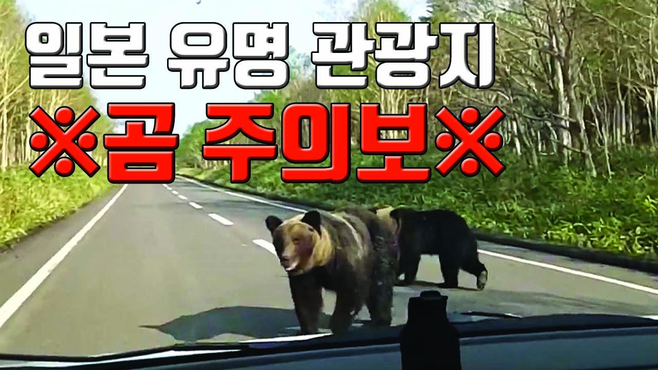 [자막뉴스] 홋카이도 등 日 유명 관광지 야생 곰 주의보!