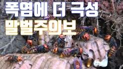 [자막뉴스] 에어컨 실외기까지 점령...'말벌 주의보'