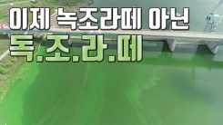 [자막뉴스] 역대급 녹조 수준...이제는 '독조 라떼'
