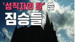 [자막뉴스] '성직자의 탈' 쓴 짐승들... 美 어린이 천여 명 성폭력