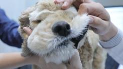 [해보니 시리즈 43] 반려동물 고령화 시대, 강아지 건강검진을 받다