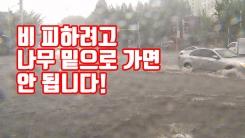 [자막뉴스] 비 피하려고 나무 밑으로 가면 안 됩니다!