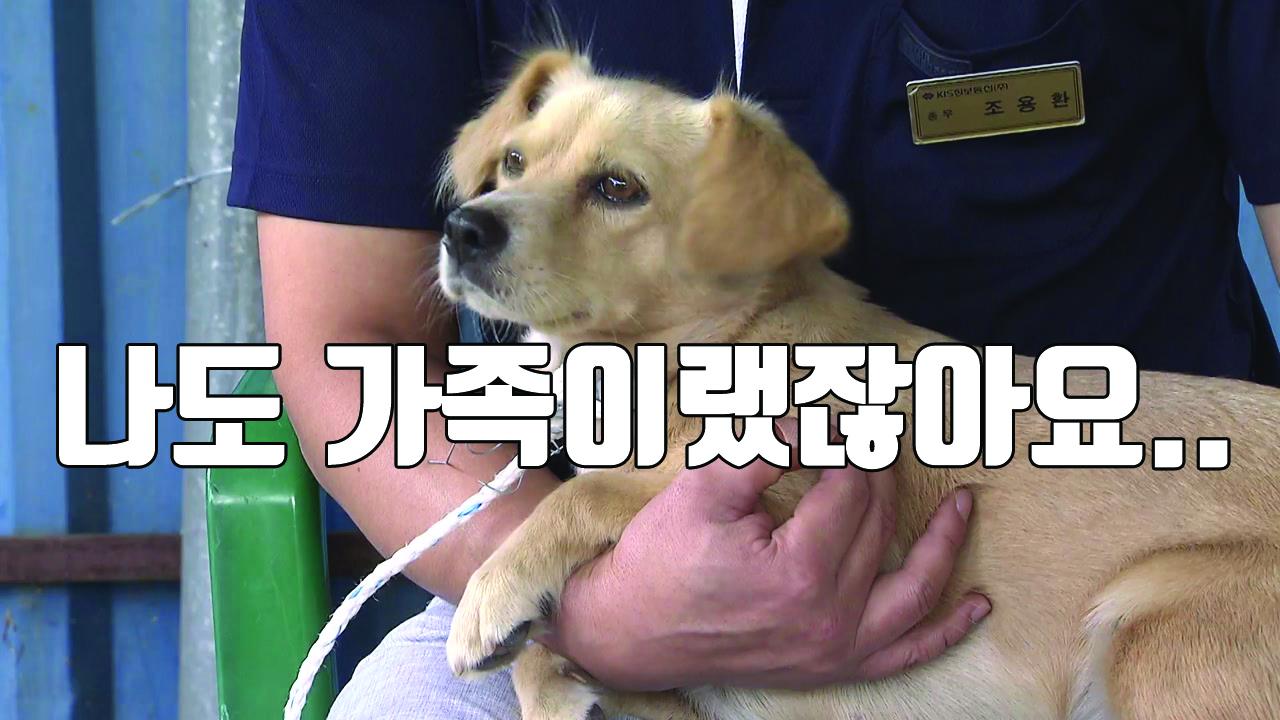 [자막뉴스] '휴가철 잔혹사'...피서지에 버려지는 반려동물