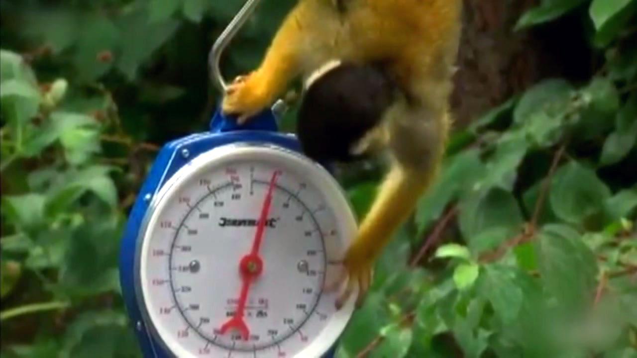 동물원 식구들, 신체검사 하는 날