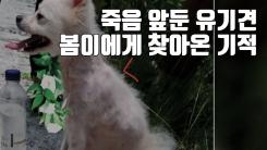 [자막뉴스] 죽음 앞둔 유기견 봄이에게 찾아온 기적