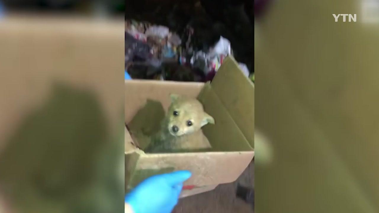 [영상] 쓰레기더미서 강아지 극적 구조 장면 '포착'