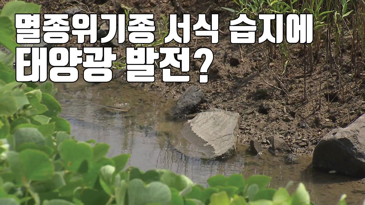 [자막뉴스] 멸종위기종 서식 습지에 태양광 발전?