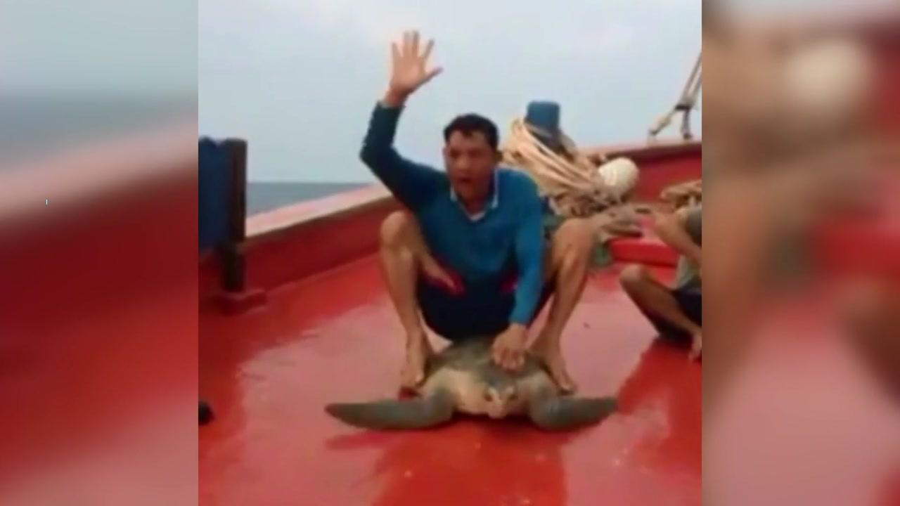 [이브닝] 거북 타고 로데오? 동물 학대 논란