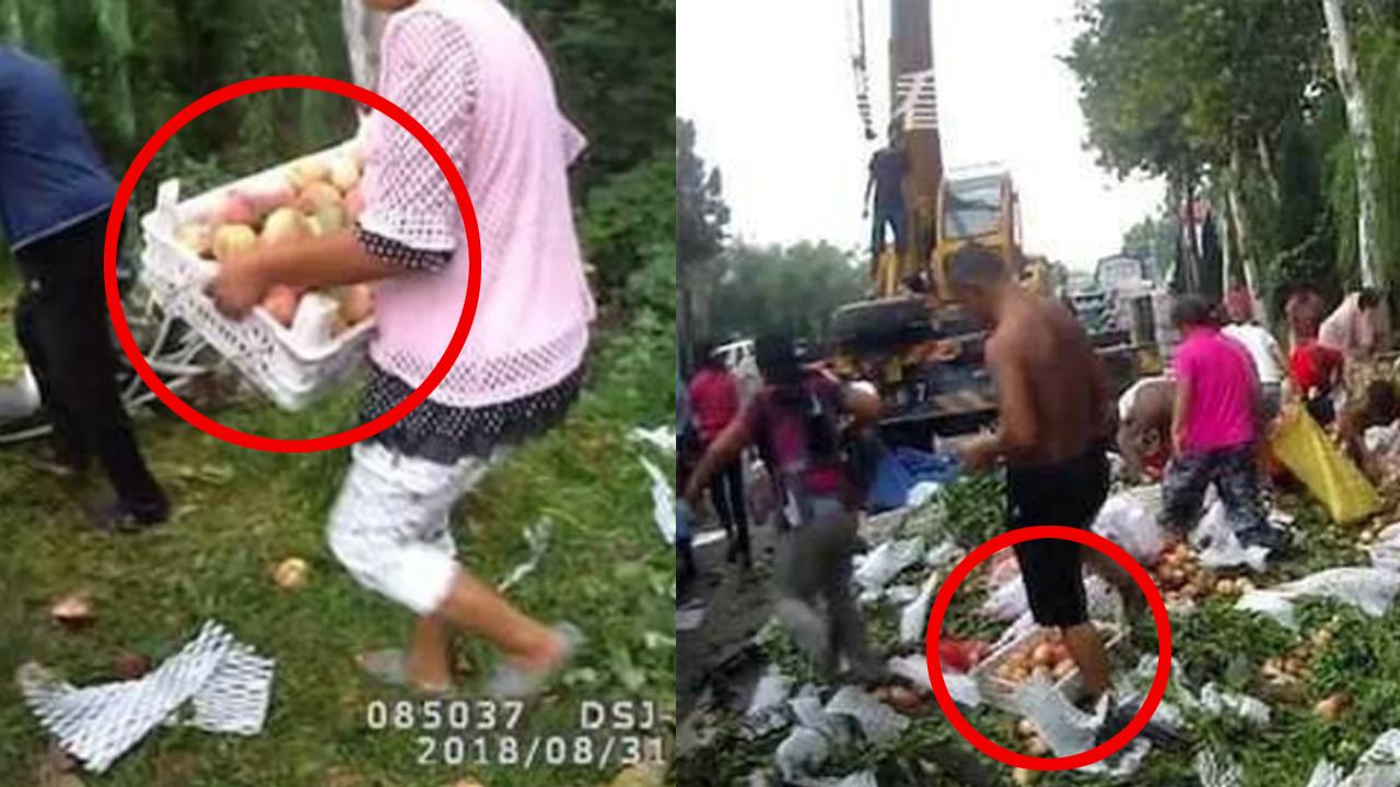 '양심은 어디에...' 中 트럭 전복 사고, 쏟아진 과일 훔쳐 간 시민들