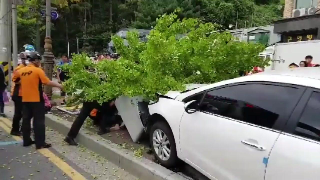 대전서 승용차가 버스정류장 돌진...7명 중·경상