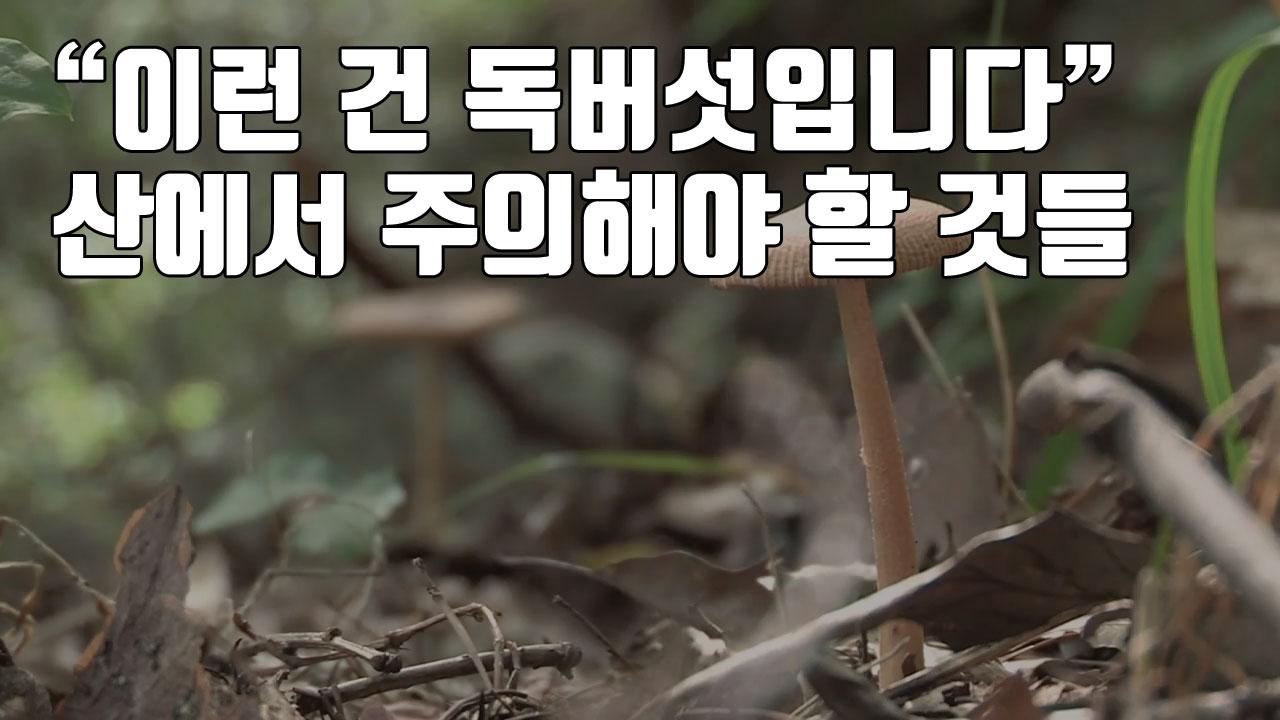 """[자막뉴스] """"이런 건 독버섯입니다"""" 산에서 주의해야 할 것들"""
