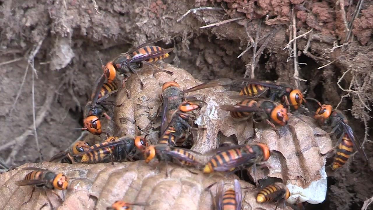 벌초·나들이 때 벌 쏘임 사고 주의!...올해만 6명 사망
