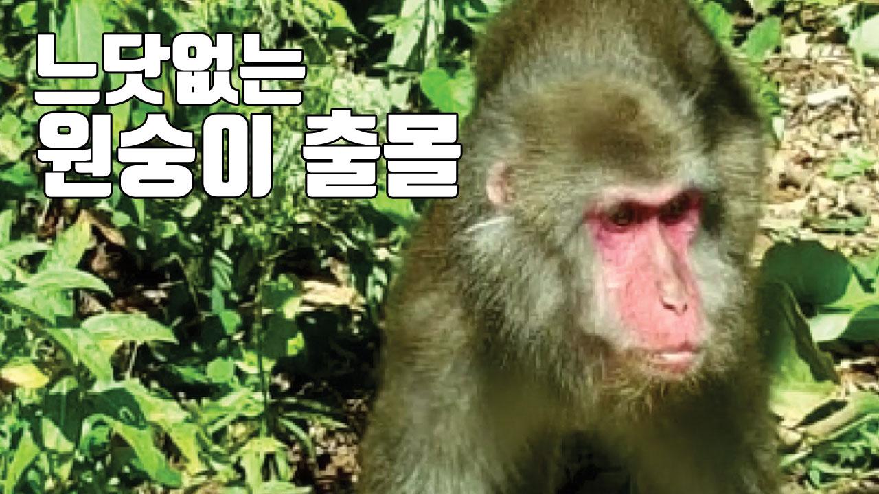 """[자막뉴스] 수풀 사이에 붉은 얼굴이...""""눈 마주치지 마세요"""""""