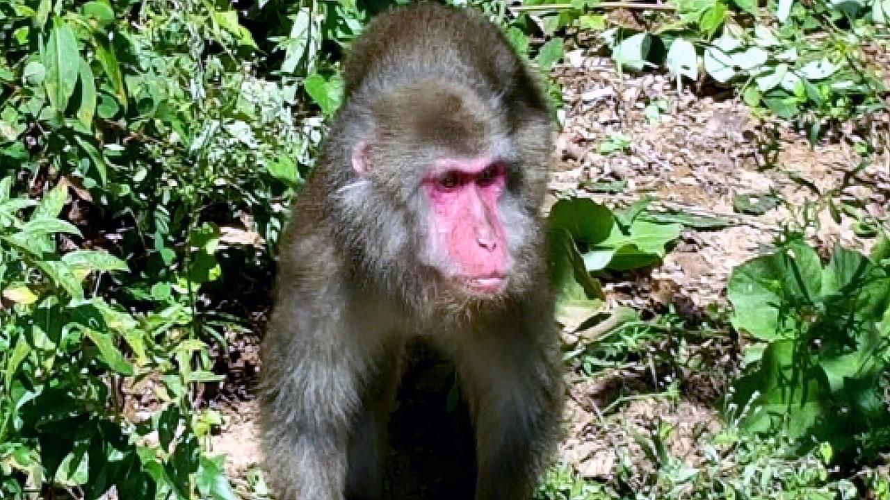 청양 칠갑산에 원숭이 출몰...수목원에서 탈출