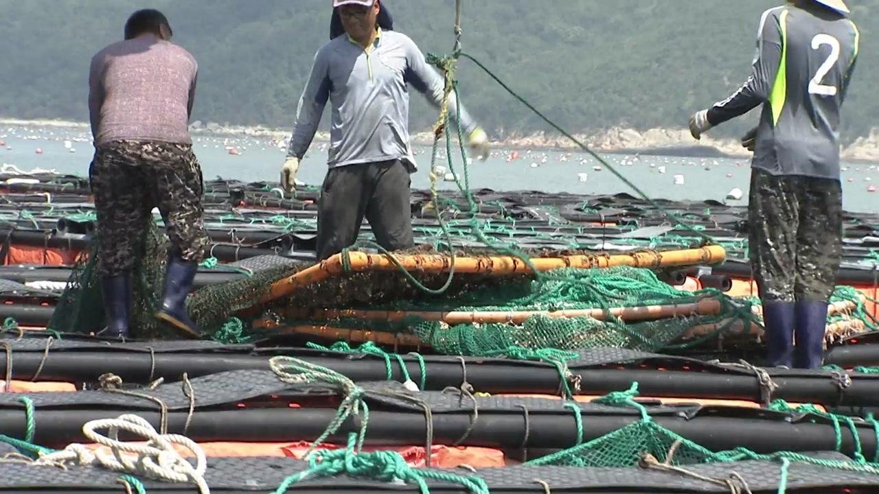 양식 어민 피해 '눈덩이'...현실적 복구 지원 절실