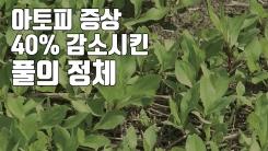 [자막뉴스] 아토피 증상 40% 감소시킨 풀의 정체
