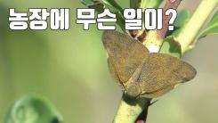 [자막뉴스] 나무에 다닥다닥...농작물 좀 먹는 외래해충