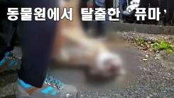 [자막뉴스] 대전 동물원에서 퓨마 탈출해 사살...문단속 허술에 무게